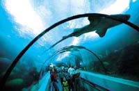 Vuelos baratos Santod Domingo: acuario